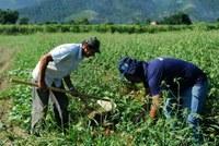 Produção agrícola