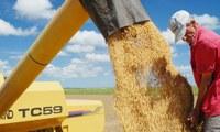 Valor da produção agropecuária do Tocantins deve fechar 2019 acima de R$ 7,6 bilhões